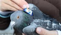 e4a7b_pigeon-carrier.jpg